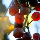Indian Summer Grapes by WildWheat