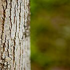 Bark by Eric Lindquist