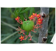 Little Flowers with Green Pod Poster