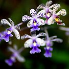 Orchid - Costa Rica by Jason Weigner