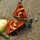 Butterfly on the Danube river bank_Budapest/Hungary2010  by ambrusz