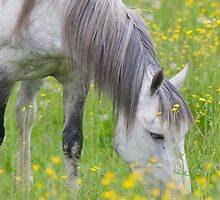 White Lashes Amidst The Buttercups by DigitallyStill