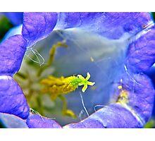 Botanically Explicit - Flower Macro Photographic Print