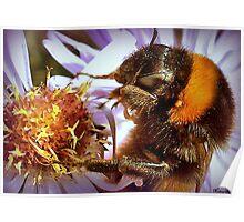 Somethings Bee-n Here Bee-fore Me! Poster