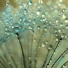 Sparkling Dandelion Drops by Sharon Johnstone