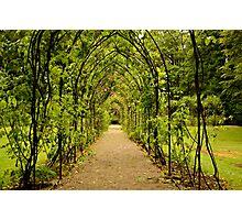 Garden Archway Photographic Print