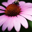 The bees know by Ted Petrovits