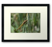 Yellow dragonfly 7624 Framed Print