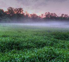 Misty Glen Just After Sunset by marshmaven