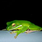 Hanging Out - green tree frog by Jenny Dean