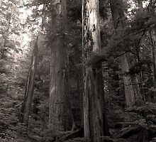 The Forest Deep - Mount Rainer National Park by Harry Snowden