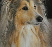 Sheltie Sheepdog by JaninesWorld