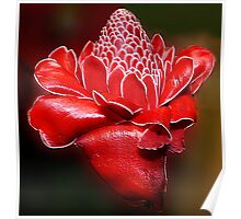 Red Torch Ginger Poster