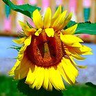 sunflower macro by Eduard Isakov