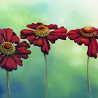 Three Red Helenium Flowers by Helen Lush