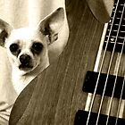 Chihuahua and the Guitar Message by Corri Gryting Gutzman