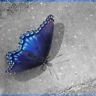 Walking Blue Butterfly by joelleherman