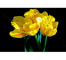Yellow and Red Tulips Photographic Print
