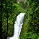 Multnomah Falls from trail by Elaine Bawden