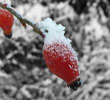 Winter Berrys by cnw180