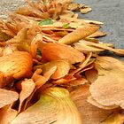Seedpod Path by marshmaven