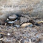 Killdeer Baby Finds a Quiet Place To Be by Deb Fedeler