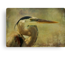 Heron On Texture Canvas Print