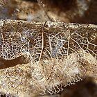 lace II by Floralynne