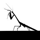 Praying Mantis Silhouette by JCMPhotos