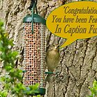 Caption Fun Feature Banner by David's Photoshop
