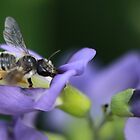 Bee and Pea by KatsEyePhoto