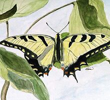 Male Eastern Tiger Swallowtail by AngieDavies