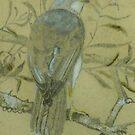 Grey Goshawk by Redviolin