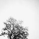 Ashes by Daniel Hachmann