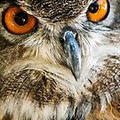 Great Horned Owl by Sam Scholes