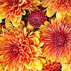Mums with dew drops by donna rae moratelli