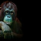 Orangutan chicks dig me...especially Lucy by alan shapiro