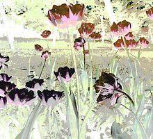 Tulips & Tulips & Tulips. by Vitta