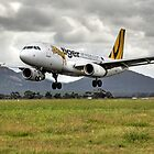 Tiger Airways by Cecily McCarthy