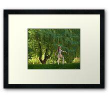 The Willow Ballet Framed Print