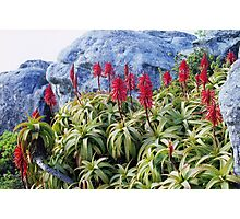 Table Top Foliage Photographic Print