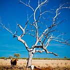 Forgotten Tree - Well Plains, QLD by Sally Werner