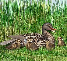 Female Mallard Duck and Chicks by Walter Colvin