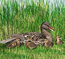 Female Mallard Duck and Chicks by Walter Colvin