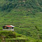 Banaue Rice Terraces by Andrew & Mariya  Rovenko