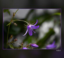 BellFlower by RosiLorz