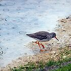 Redshank by vivsworld