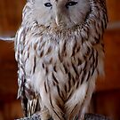 """and the owl says """"...oye..."""" by Roslyn Lunetta"""