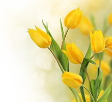 Yellow tulip flowers by Pics4merch