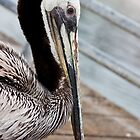 Wet Pelican by Robby Ticknor
